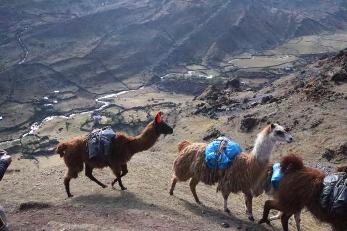 alpaca carrying bags